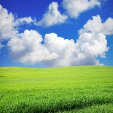 Free Green Field And Sky Royalty Free Stock Photos - 20788728