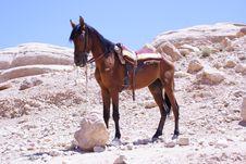 Free Petra Jordan Royalty Free Stock Photography - 20789667