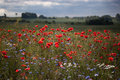 Free Landscape With Poppies. Stock Photos - 20794893