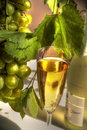 Free Close-up Of Champagne In Glass. Royalty Free Stock Photos - 20799248
