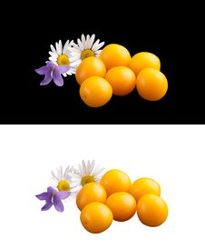 Free Wild Plums And Wood Flowers. Royalty Free Stock Image - 20790036
