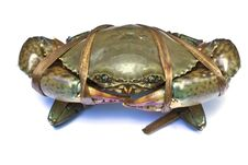 Free A Black Crab Royalty Free Stock Image - 20792336