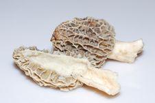 Free Edible Mushroom Royalty Free Stock Photos - 20792908
