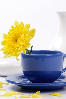 Free Yellow Mums In A Teacup Stock Images - 20793314