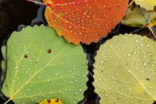 Free Autumn Leaves Stock Photos - 20793383