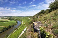 Free Beautiful Vineyard Landscape Stock Image - 20793541