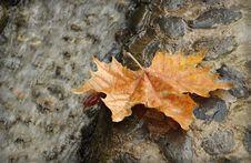 Free Autumn Leaf Stock Image - 20793561