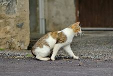 Free Cat Stock Image - 20793961