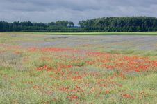Free Landscape With Poppies. Royalty Free Stock Photo - 20794815
