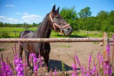 Free Horse In Open-air Cage Royalty Free Stock Photography - 20795187