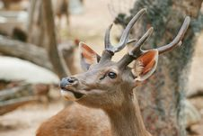 Free Deer Stock Photo - 20798260