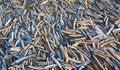 Free Seashell Background Royalty Free Stock Photo - 2081955