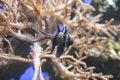 Free Tropical Fish Stock Photos - 2086163