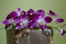 Free Violet Orchid Stock Image - 2080411