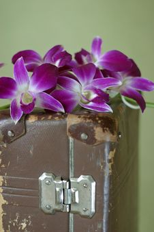 Free Violet Orchid Stock Image - 2080441