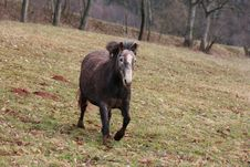Free Running Horse Royalty Free Stock Photos - 2082068