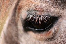 Free Eye Stock Photos - 2082073