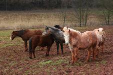 Free Dirty Horses Stock Image - 2082221