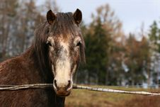 Free Portrait Of Horse Royalty Free Stock Images - 2082329