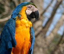 Closeup Of Colorful Macaw Stock Photography