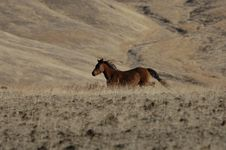Free Wild Horse Running Royalty Free Stock Photography - 2084367