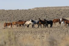 Wild Horses Standing And Feeding Stock Photo