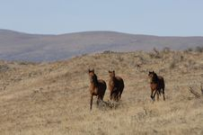 Wild Horses In Wide Open Places Stock Photography