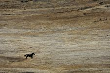 Free Wild Horse Running In The Hills Stock Image - 2084631