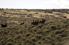 Free Wild Horses Standing In Sagebrush Stock Photos - 2084773