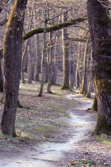 Free Forest Stock Photo - 2086330