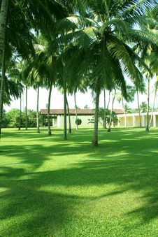 Free Green Grass And Coconuts Stock Photos - 2086553