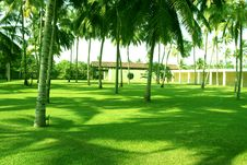 Free Green Grass And Coconuts Royalty Free Stock Photos - 2086558