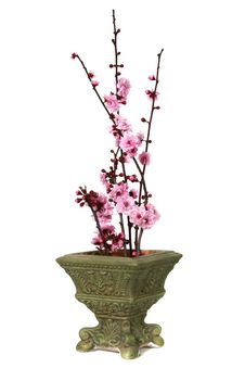 Free Cherry Blossoms On Display Stock Images - 2087224