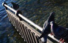 Free Bird Series Stock Image - 2088431