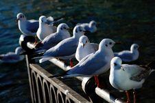 Free Bird Series Royalty Free Stock Image - 2088446