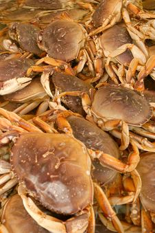 Free Crab Royalty Free Stock Photos - 2089058