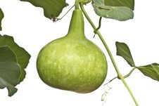 Free A Calabash Vegetable Stock Images - 20800634