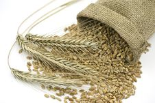 Free Three Rye Ears  Beside Liying Sack  With Grain Stock Image - 20800791
