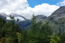 Free Ar Spruce On A Background Of Alpine Landscape Royalty Free Stock Images - 20803129
