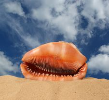 Free Large Seashell On The Sand Stock Images - 20803294