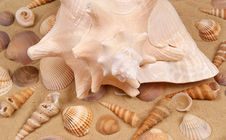 Free Large Seashell On The Sand Stock Images - 20803594