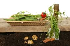 Free Harvesting Vegetables Royalty Free Stock Photo - 20804205