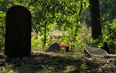 Jewish Cemetery In Otwock &x28;Karczew-Anielin&x29; Royalty Free Stock Images