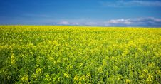 Free Spring Yellow Meadow. Stock Image - 20804381