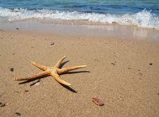 Free Starfish Stock Image - 20805161