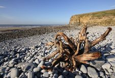 Free Driftwood On Dunraven Beach Stock Image - 20805381