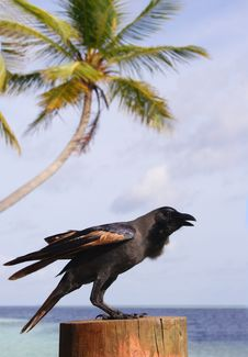 Free A Black Bird, Sea And Palm Royalty Free Stock Photography - 20805637