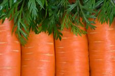 Free Fresh Carrot Fruits Stock Image - 20805971