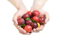Free Prunes In Hands Stock Images - 20806004