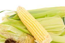 Free Ear Of Corn Royalty Free Stock Photos - 20809078